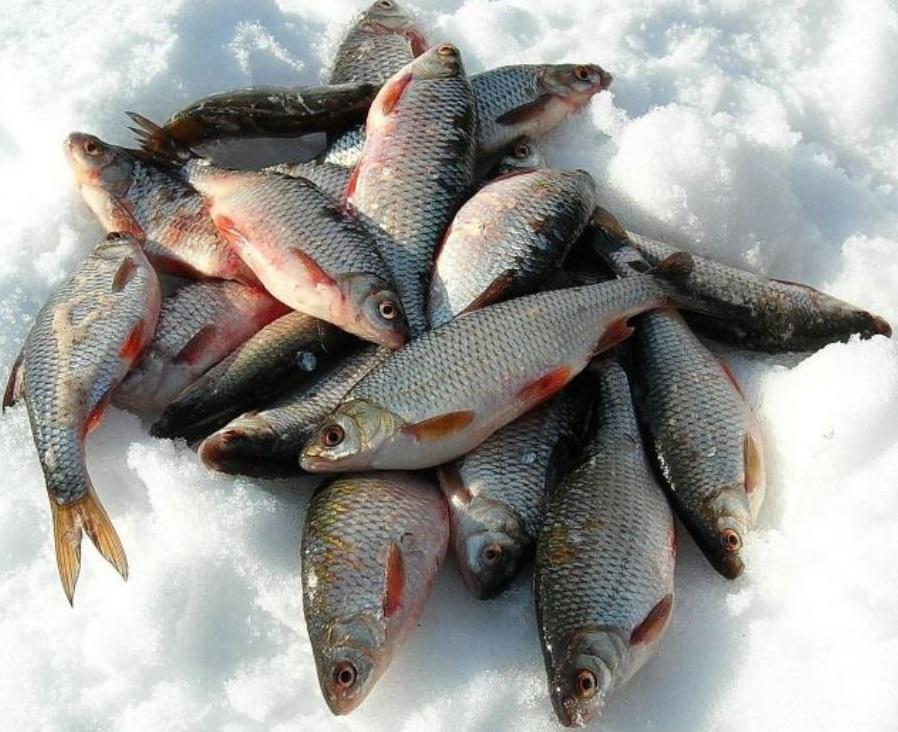 летняя рыбалка в казахстане на чебака и на какую насадку видио