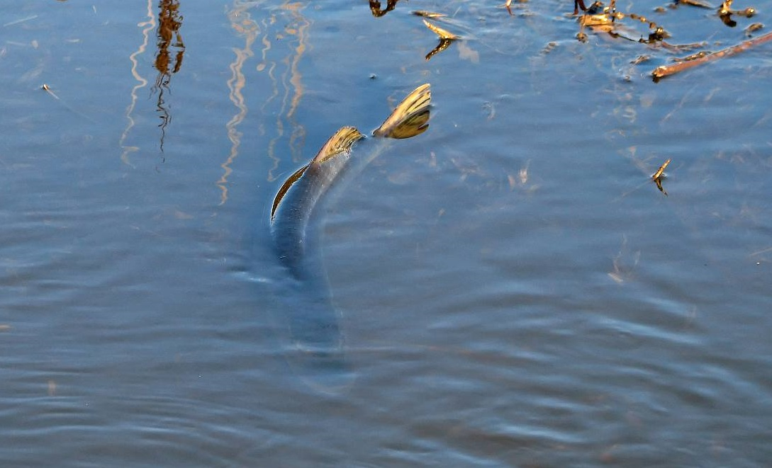 в какое время весной ловить рыбу на озере