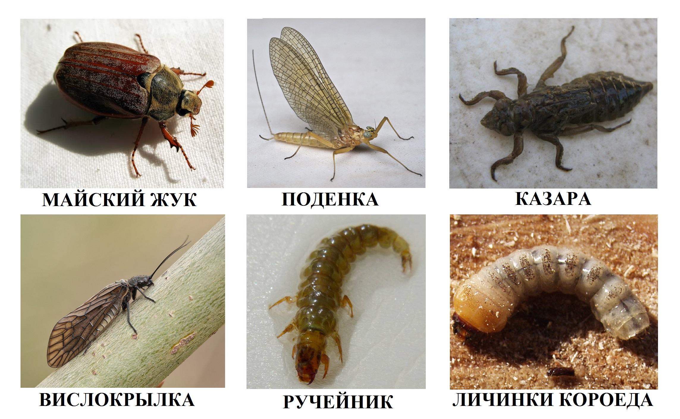 личинка майского жука как наживка