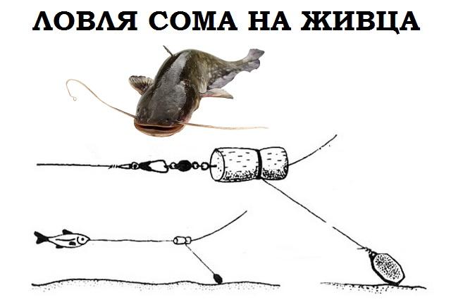 Ловля на живца лягушку