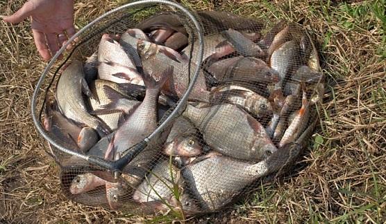 ловля мирной рыбы ранней весной