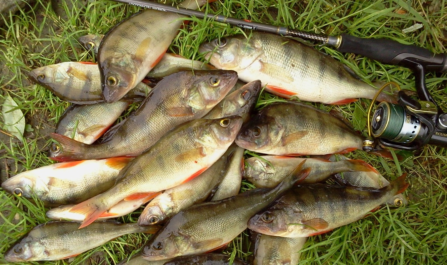 рыбалка на мормышку в липецке