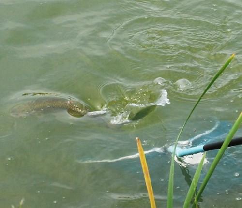 светлый ключ самарская область рыбалка форум