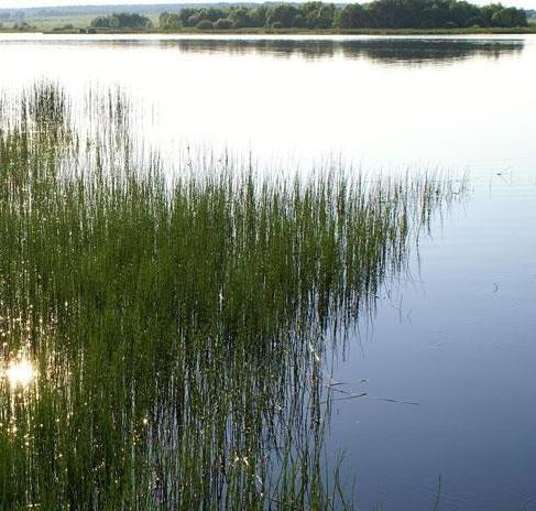 рыбалка в ивановской области комсомольского района