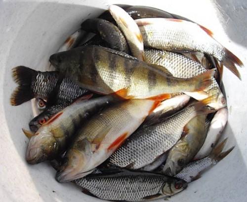 ловля рыбы на липецких прудах