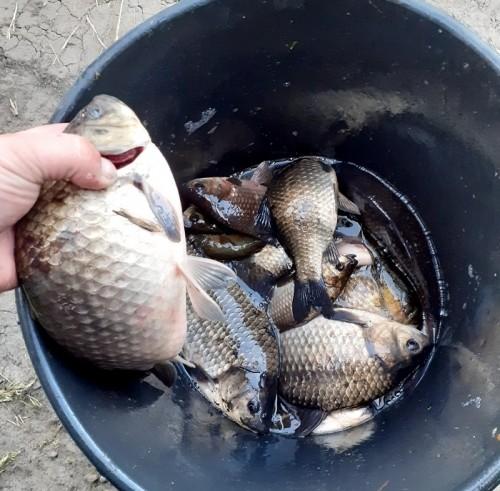 рыбалка в сладковском районе