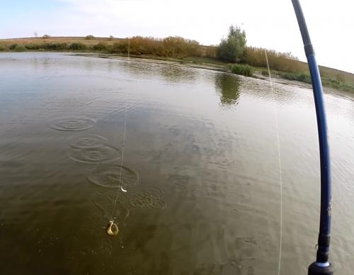 кировская область рыбалка платные пруды