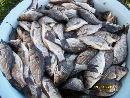 рыбалка казанское направление